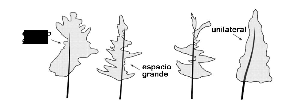 Mala calidad en la forma de las hojas